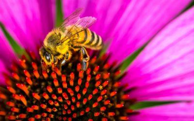 El uso de la miel en coctelería